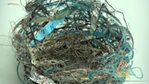 This nest is an apt emblem for Saunier's poetry. (Image courtesy of Terrapin Books.)