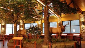 The view from inside Benezette's Elk County Visitors' Center: An elk appetizer before the smorgasbord. (Photo by Taylor Studios, Inc., via Flickr.)