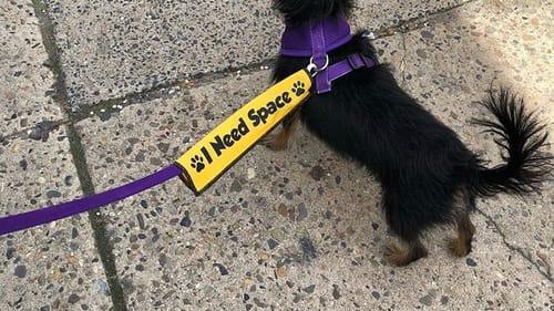 Yes, she's cute. Keep on walking. (Photo by Alaina Johns.)