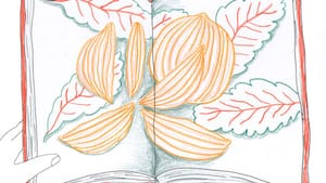 Illustration by Hannah Kaplan for BSR.