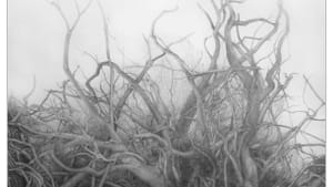 "Csilla Sadloch, ""Island Root,"" graphite, 2013."