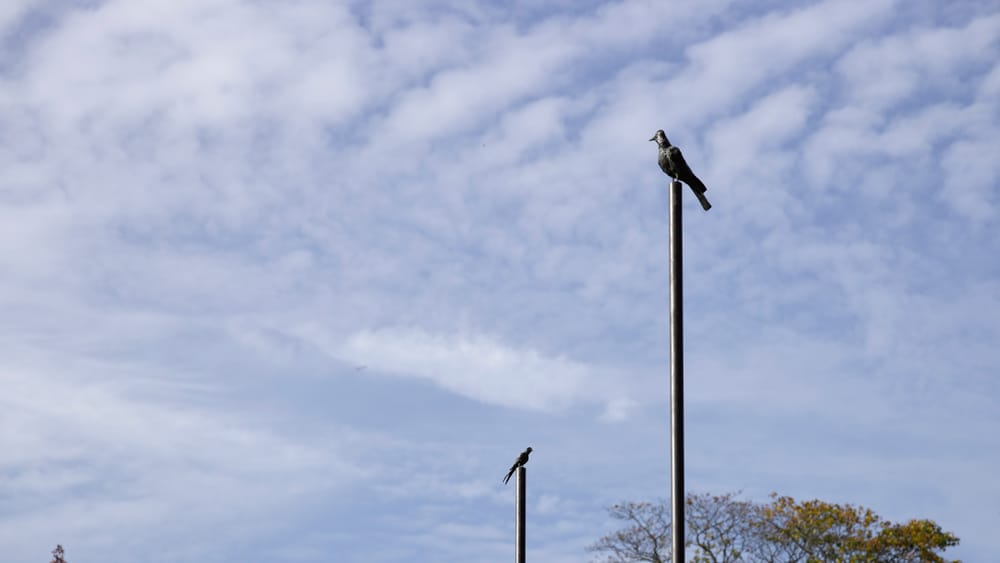 """Tracey Emin's """"A Moment Without You."""" Five bronze poles topped with bird sculptures are spaced out in park greenspace."""