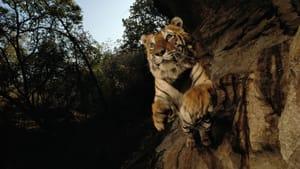 """Charger, Bandhavgarh National Park, India, 1996."" Inkjet print mounted on Dibond. Photo courtesy of Michael Nichols/National Geographic.)"