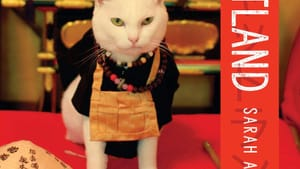 These Japanese cats make a happy distraction from tense times in the US. (Image courtesy of Countryman Press.)