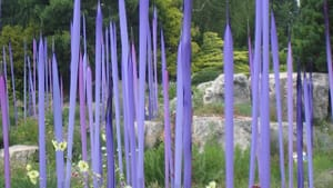 Dale Chihuly installation at Denver Botanic Gardens (photo by the author)